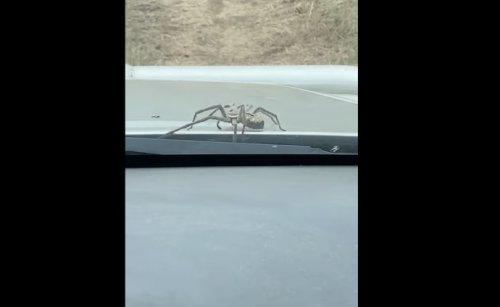 VIDEO - Quand soudain, une énorme araignée sort de la voiture