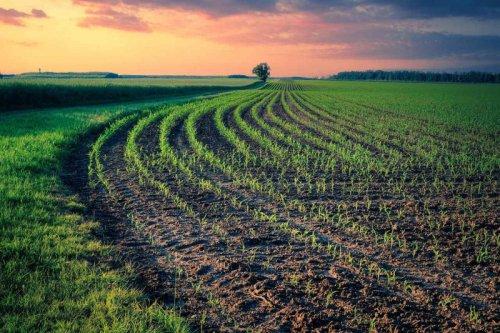 Бразильские аграрии начали засеивать плантации соей