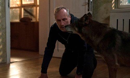 """""""Gefangen"""" im Ersten: Lola Liefers dreht mit dem Wolf"""
