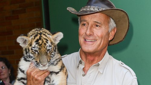 The Top 8 Jack Hanna TV Guest Spots, From 'Letterman' to 'Corden'