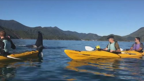 'Oh my god!' - Kayak tour group in 'absolute awe' as large orca bull says hello