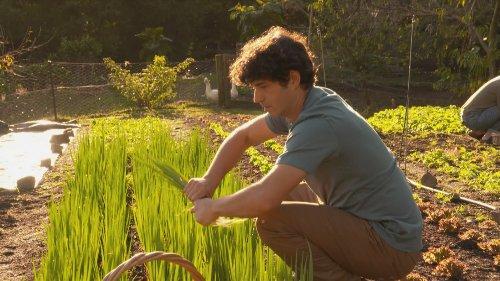 Thames family's garden feeding hundreds in the community