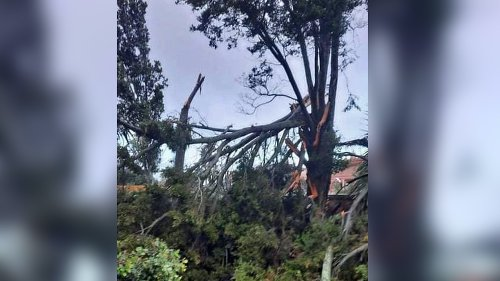 Auckland tornado 'very significant' for New Zealand – meteorologist
