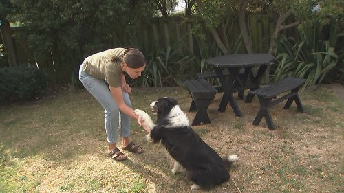 New research suggests dogs show jealousy in similar way to humans