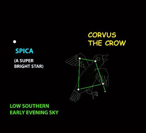 Mike Lynch's Skywatch: Meet Corvus, the wayward crow