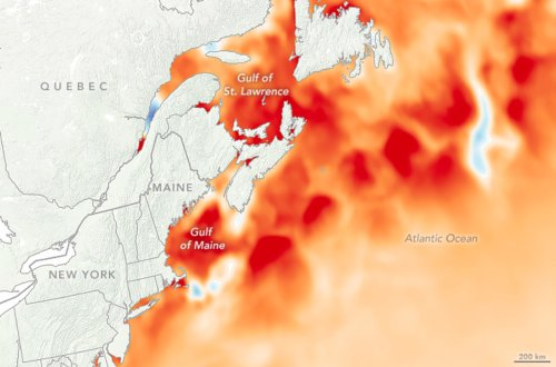 The Gulf Stream is migrating closer to Canada, and scientists are concerned