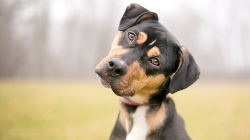 Your Dog Can Tell When You're Lying - Here's How
