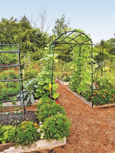Planning and designing a productive vegetable garden