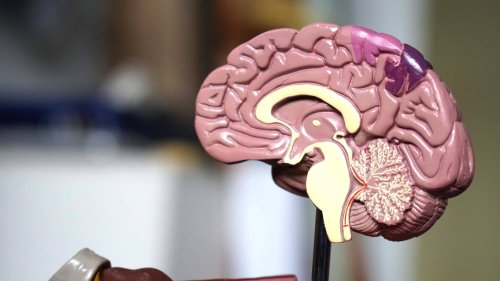 Book Review: Unlocking the Mysteries of the Human Brain