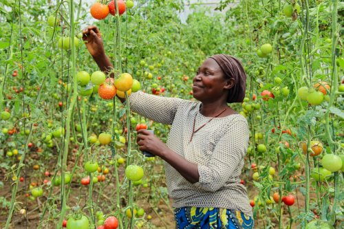 From farm to table, let's talk food (systems)