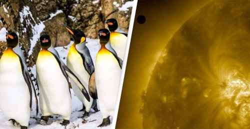 Scientists Believe 'Penguins Could Be Aliens' After Venus Chemical Discovery