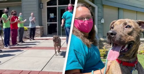 Animal Shelter Gives Longest Resident Standing Ovation As He Finds Forever Home