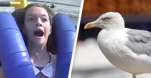 Video Shows Terrifying Moment Teen Gets Slapped By A Seagull At 75mph