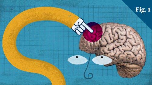 The evolutionary advantage of the teenage brain
