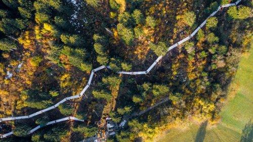 World's Longest Treetop Walkway Constructed In Swiss Alps (1.56km)