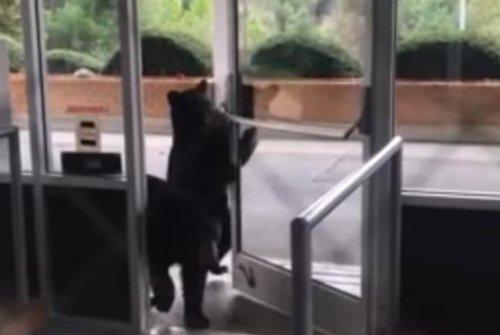Black bear cubs wander into North Carolina nursing home