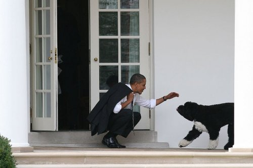 Obamas announce death of former first dog, Bo