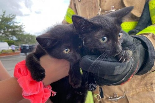 Two kittens rescued from engine compartment of car in Florida