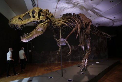Billions of T. rexes walked on North America during the Age of the Dinosaurs