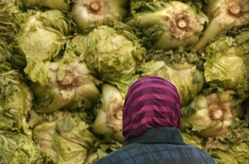 Video of cabbage processor in China goes viral in South Korea