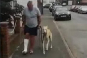 Man spends $400 to find out limping dog was imitating owner