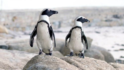 What's On Tonight: 'Penguin Town,' 'Dave,' And More 'Loki'