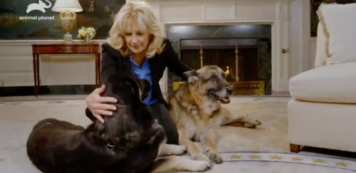 Dr. Jill Biden Used The White House Dogs To Share A Mask PSA