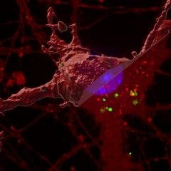 Scientists untangle a new process leading to dementia
