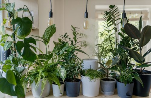 Caring For Houseplants: Tips, Tricks And Products You Need