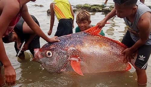 Earthquake leads to fisherman's surprising catch of opah