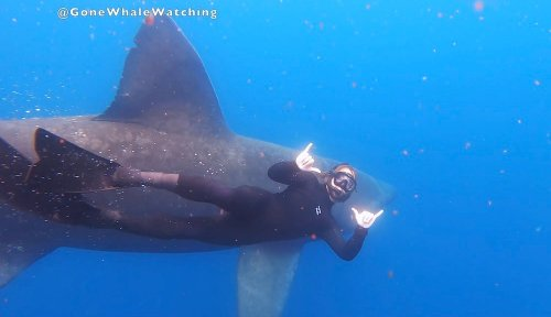 Boaters swim with giant sharks during rare encounter