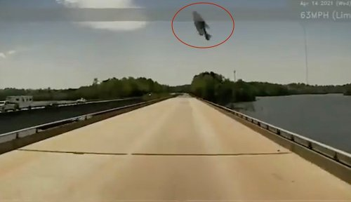Truck driver records collision with giant fish falling from sky