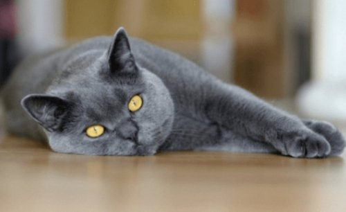 More than 300 cats have died of an unknown disease in the UK