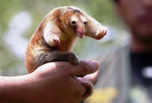 10 Rarest Animals of the Planet