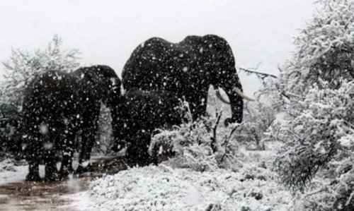 Record-breaking frosts were recorded in southern Africa