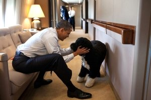 Barack Obama and His Family Mourn Dog Bo's Death: 'A True Friend'
