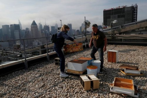 Beehive Deliveries Keep New Yorkers Buzzing on Rooftops, Backyards