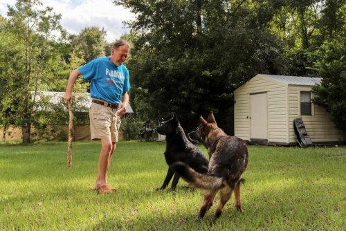 Man's Best Friend: Dog Alerts Neighbor When Owner Has Stroke