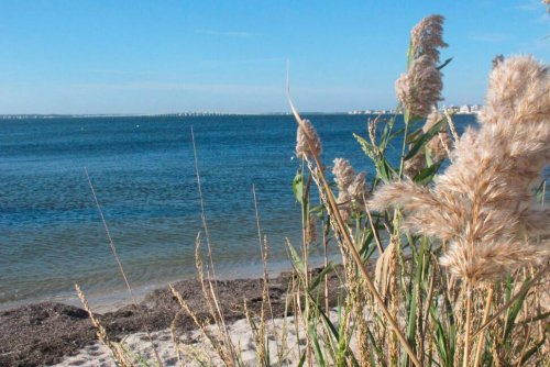 Plan to Heal Barnegat Bay, Which Has Been 'Loved to Death'