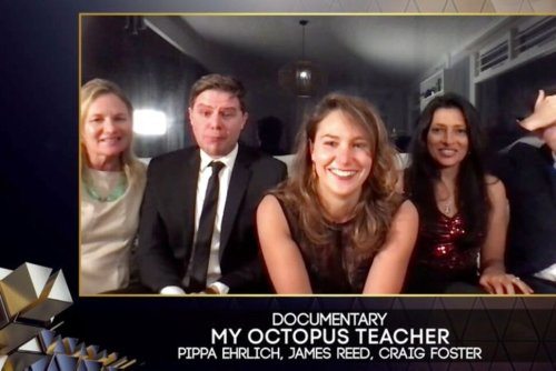 Human-Octopus Love Story up for Best Documentary Oscar