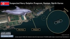 Discover marine mammal