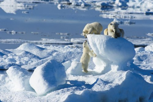 These incredible Arctic voyages will be worth the wait | Vacations & Travel