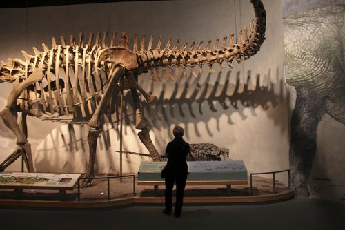 Dinosaur Hotel Unleashed in Denver — Vagabondish
