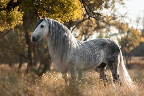 Speaking to Animals Changed My Life: The Day a Horse Spoke to Me