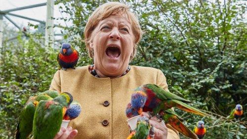 L'histoire derrière la photo folle d'Angela Merkel au zoo, qui a fait le tour des réseaux sociaux