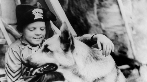 Lee Aaker, Child Star of 'The Adventures of Rin Tin Tin,' Dies at 77