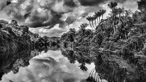 Influential Photographer Sebastião Salgado on Capturing the Majestic Rainforest for His New Exhibit 'Amazonia'