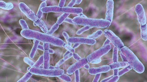 Probiotics May Help in Dietary Management of Type 2 Diabetes