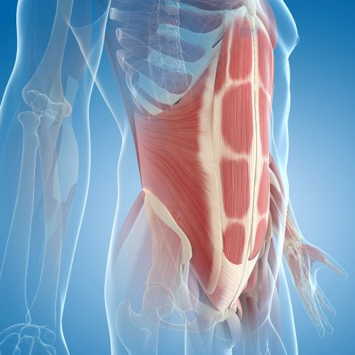 Meet Your Ab Muscles to Find Out How They Work