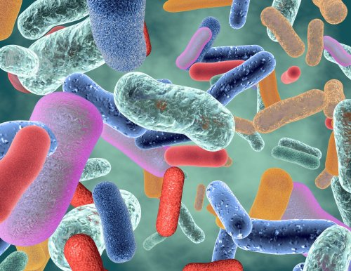 You Are What You Eat: Heart Health and More Linked to Gut Microbiome